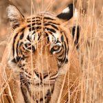 Ranthambhore Tiger Reserve-The land of Tigers