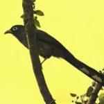 Birding at Wayanad