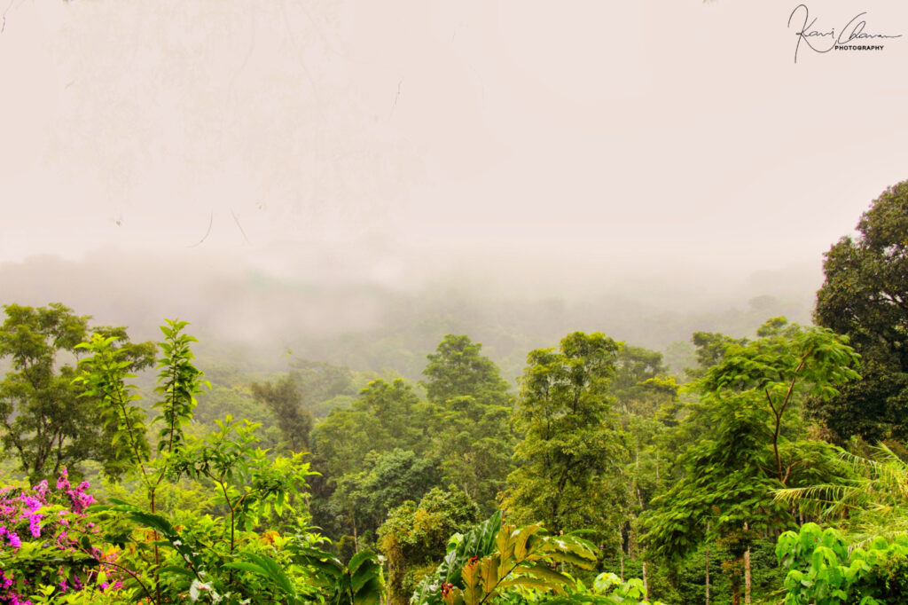 Green Forest and mountain range of coorg